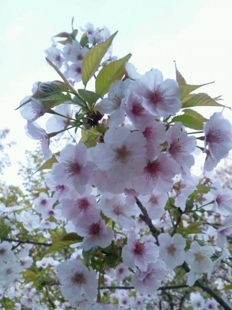 2012年の桜〜エクセレント!〜